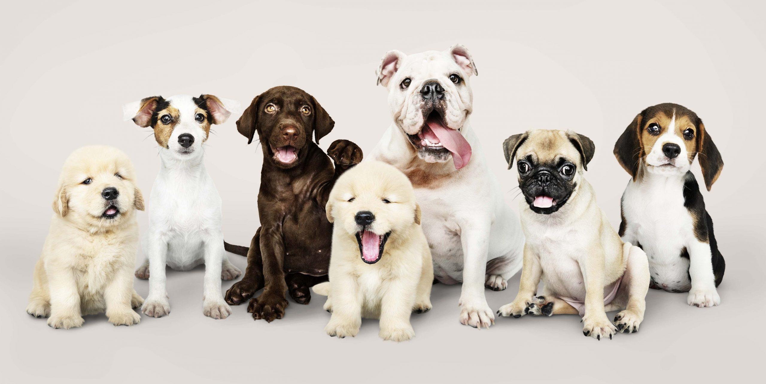 psí klienti